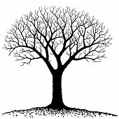 stock photo of dead-line  - vector illustration of bare tree - JPG