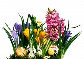 picture of narcissi  - Natural spring flowers  - JPG