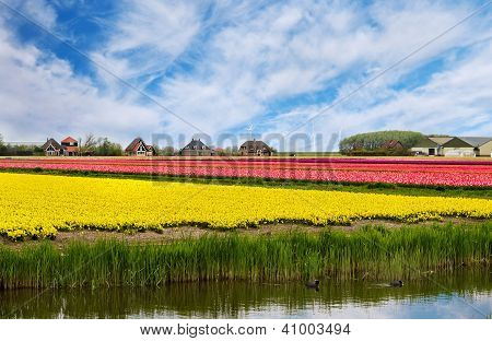 Spring Landscape In Holland