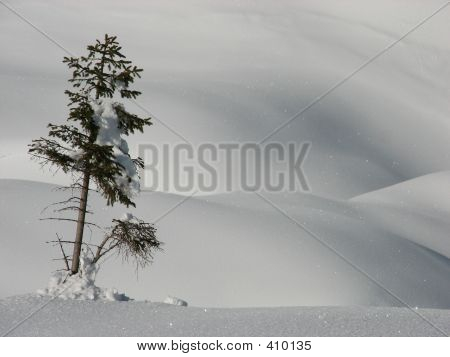 Lonesome Tree In Winter