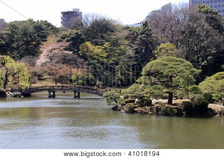 Park In Tokyo During Blossom Time