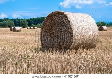Stack hay