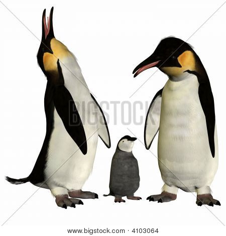 Penguins With Chick