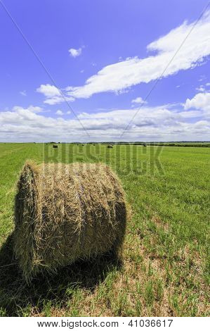 Round Bale Of Hay in a Green Field