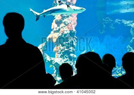 People looking on a Shark
