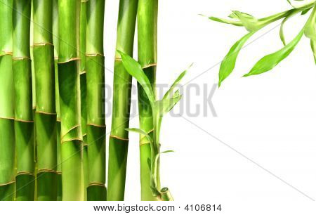 Bamboo Shoots Stacked