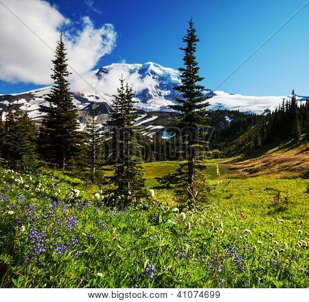flowers meadow in Rainier NP,USA