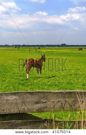 Spring with young foal in the green meadows