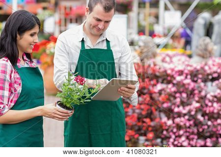 Garden center workers using tablet pc to check flowers in garden center