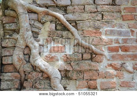 Wall And Tree