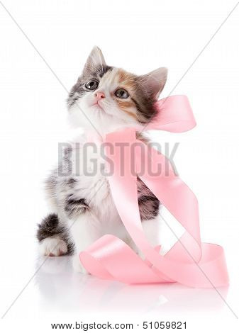 Multi-colored Kitten With A Pink Tape
