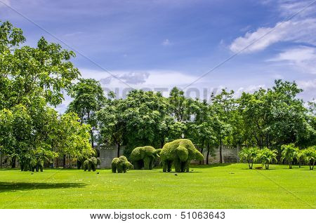 Topiary, Elephants Trimmed Out Of Shrubs