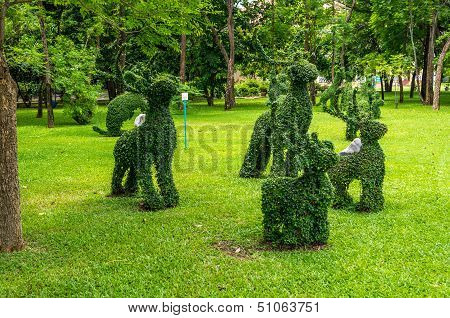 Topiary, Rabbits  Trimmed Out Of Shrubs