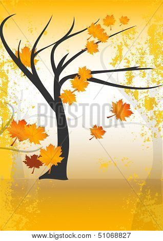 Fall or autumn tree
