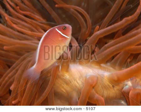 Fish_36715