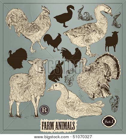 Collection Of High Detailed Hand Drawn Animals In Vintage Style