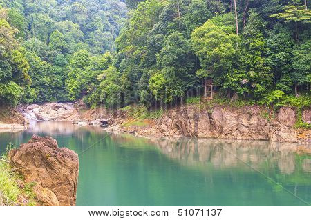 Reflection Of Rain Forest