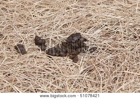 Horse Manure On Dry Grass