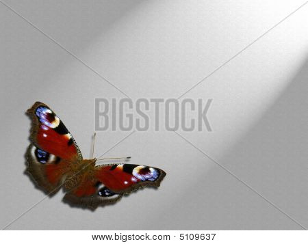 Mariposa aislado en un rayo de luz