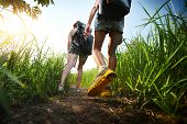 image of greenery  - Two hikers with backpacks walking through lush green meadow - JPG