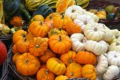 stock photo of gourds  - An assortment of small pumpkins and gourds in basket - JPG