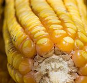 stock photo of corn cob close-up  - Close up of ripe golden corn cob - JPG