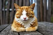 stock photo of domestic cat  - Closeup sleepy cat outdoors in the sun - JPG