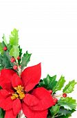 stock photo of aquifolium  - Twig of holly berry and poinsettia flower - JPG