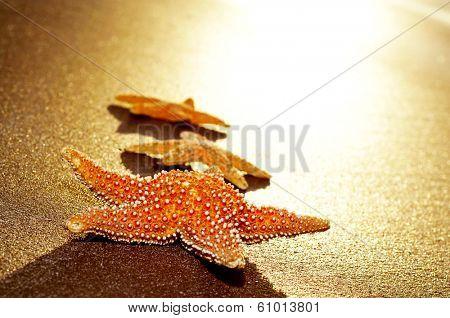 some seastars on the shore of a beach illuminated by a sunbeam