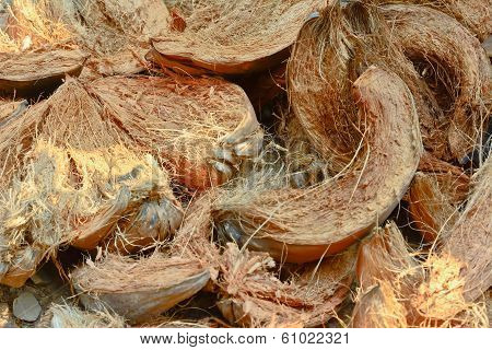 Close-up Coconut Husk