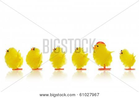 A line of toy Easter chicks with an odd cockeral in the row, isolated on a white background.