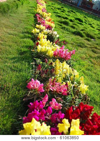 Queue of colorful flowers