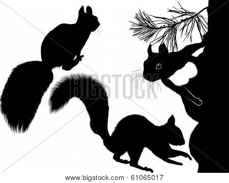 animal squirrel