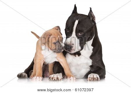 adorable puppy playing with a dog