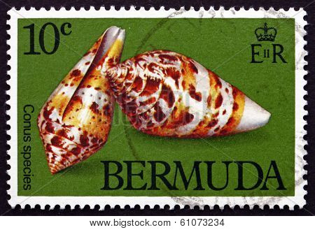Postage Stamp Bermuda 1982 Conus Species, Animal
