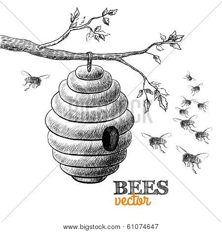 Honey bees and hive on tree branch