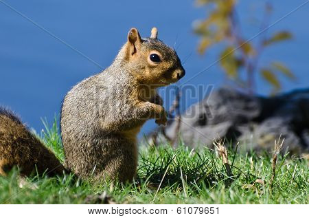 Cute Little Squirrel Standing In The Grass