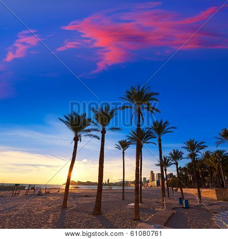 Benidorm Alicante playa de Poniente beach sunset in Spain with palm trees