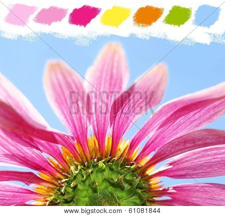 Under A Coneflower Color Palette