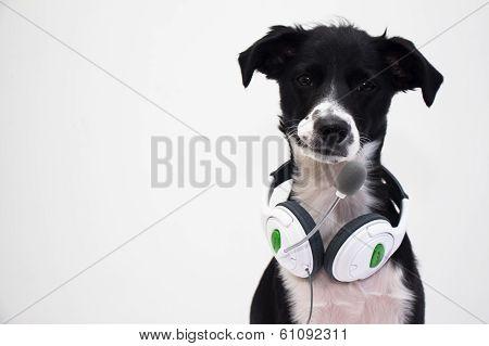 dog whit headphone