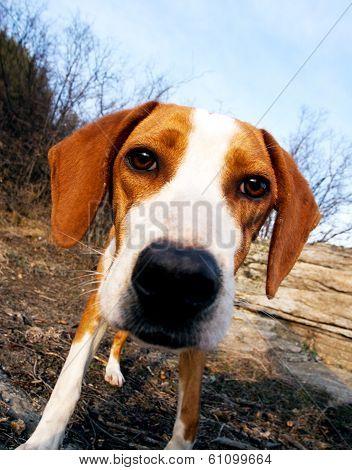 Wide Angle Dog