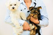 picture of veterinary  - Veterinary treatment  - JPG