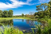 stock photo of grass area  - Green trees by the lake on a sunny day with clouds on the sky