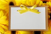 image of gerbera daisy  - Blank message card with beautiful yellow gerberas - JPG