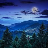 Pine Trees Near Valley In Mountains And Forest On Hillside Under Night Sky With Moon