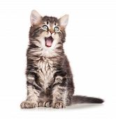 stock photo of puss  - Yawning cute kitten isolated on white background cutout - JPG