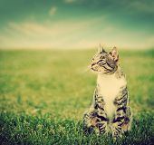 foto of puss  - Cute cat sitting on green spring grass on sunny day - JPG