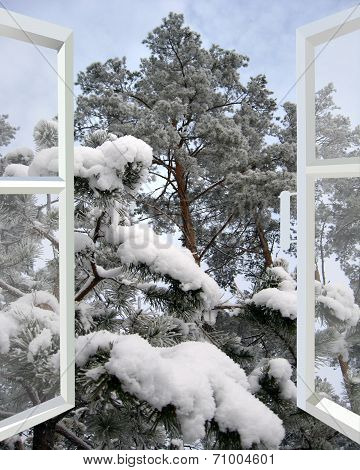 Open Window To Snowy Winter Forest