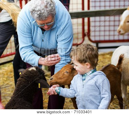 Boy And Grandmother Feeding Animals