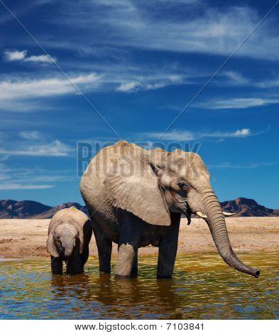 Elefantes en riego